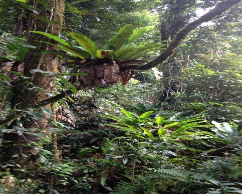 Queensland-Cairns-Tours-and-region (6)